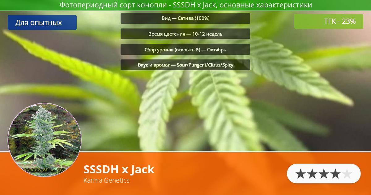 Инфограмма сорта марихуаны SSSDH x Jack