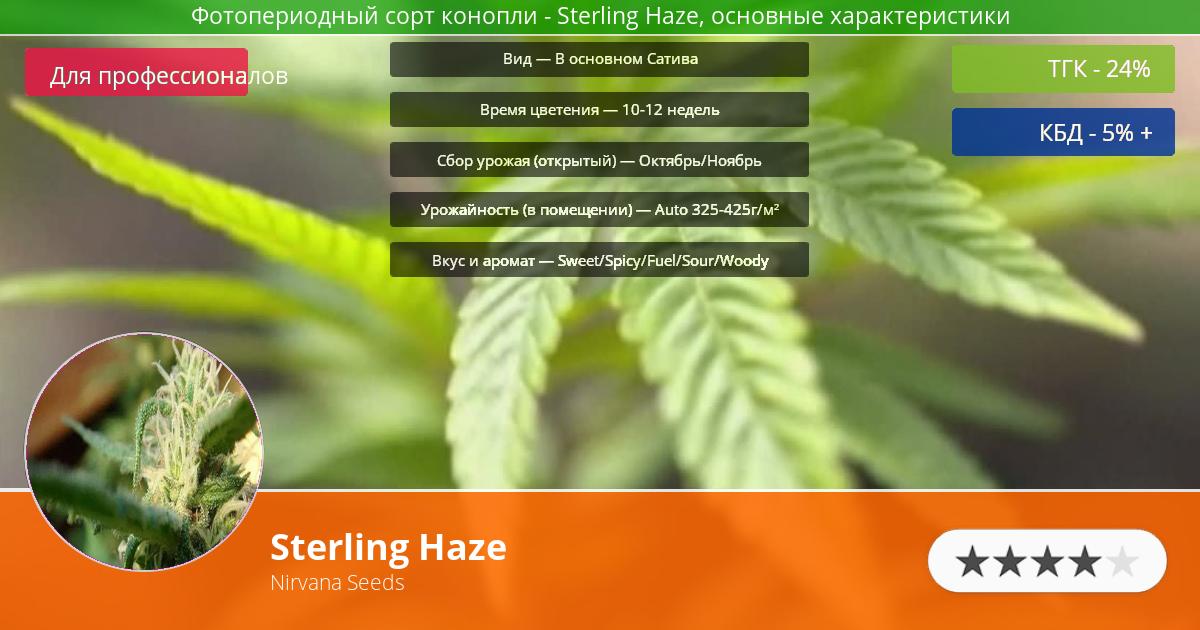 Инфограмма сорта марихуаны Sterling Haze