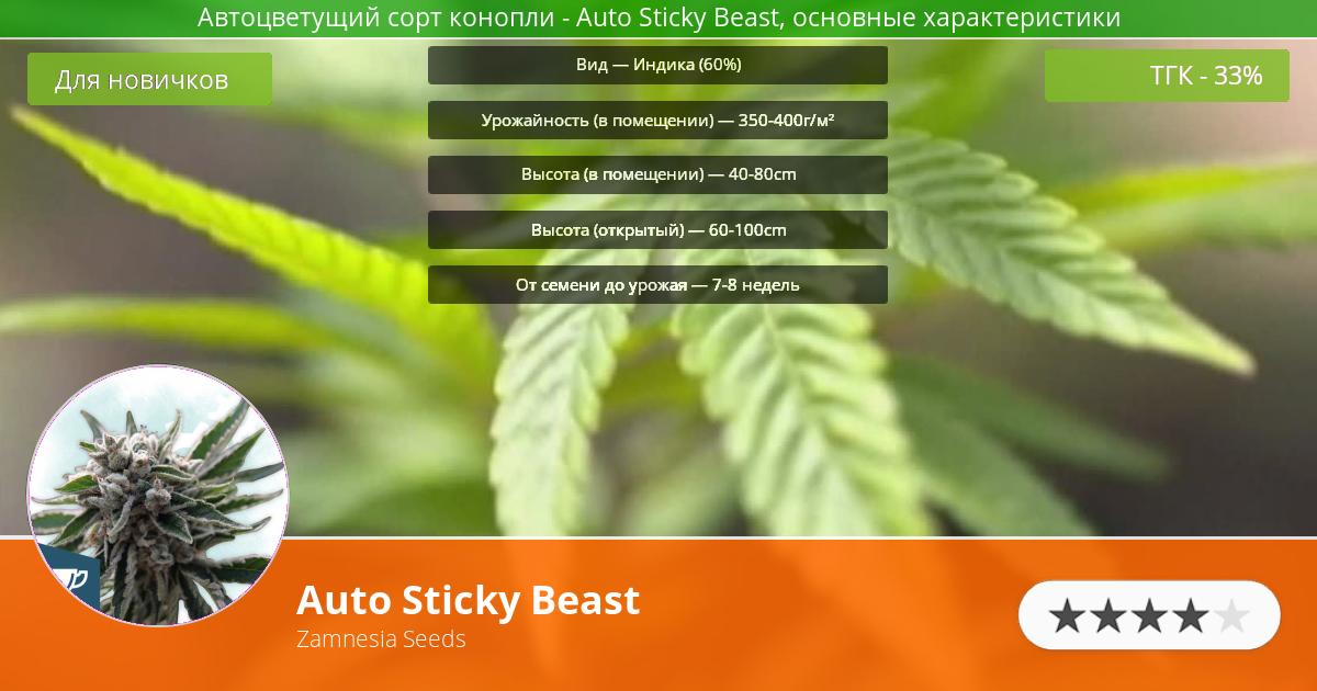 Инфограмма сорта марихуаны Auto Sticky Beast