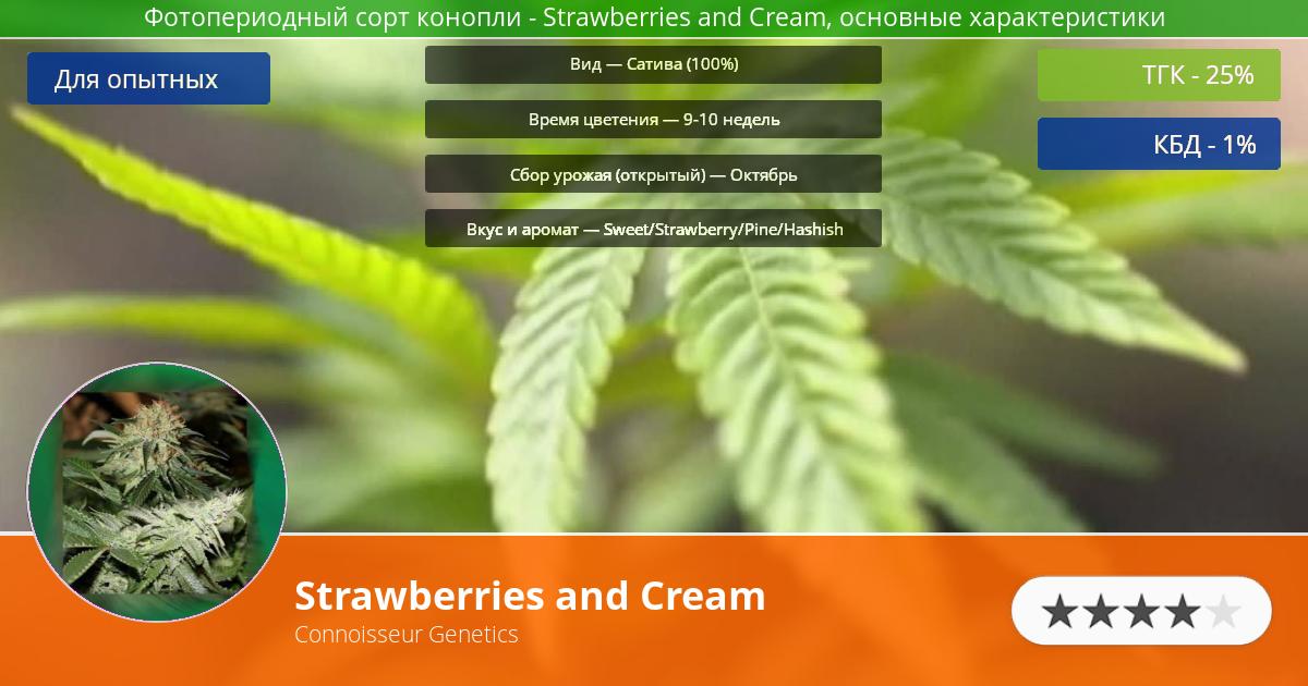 Инфограмма сорта марихуаны Strawberries and Cream