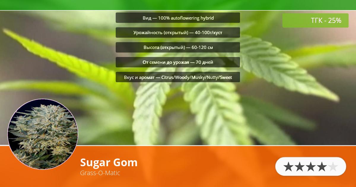 Инфограмма сорта Sugar Gom