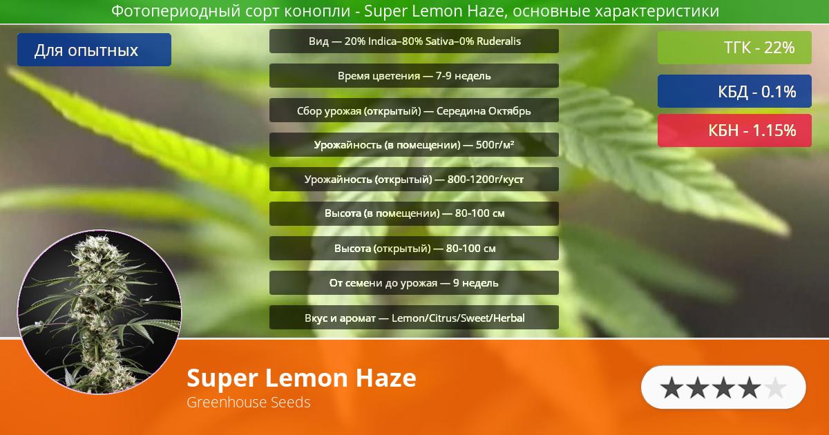 Инфограмма сорта марихуаны Super Lemon Haze