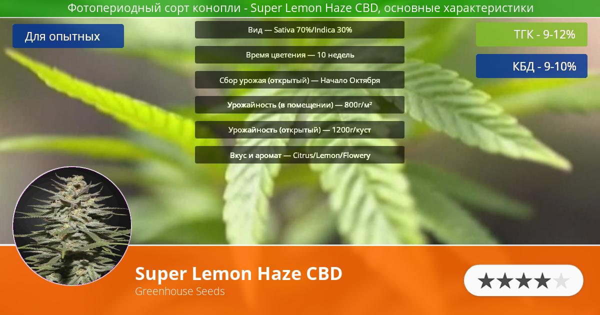 Инфограмма сорта марихуаны Super Lemon Haze CBD