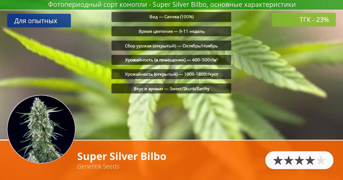 Инфограмма сорта марихуаны Super Silver Bilbo