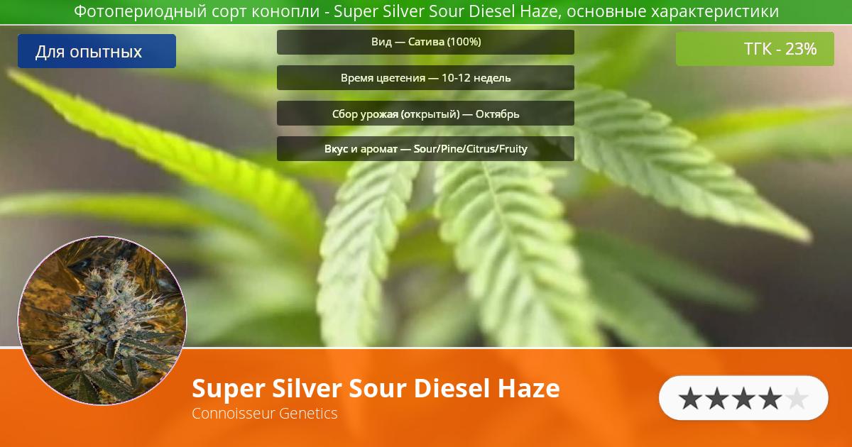 Инфограмма сорта марихуаны Super Silver Sour Diesel Haze