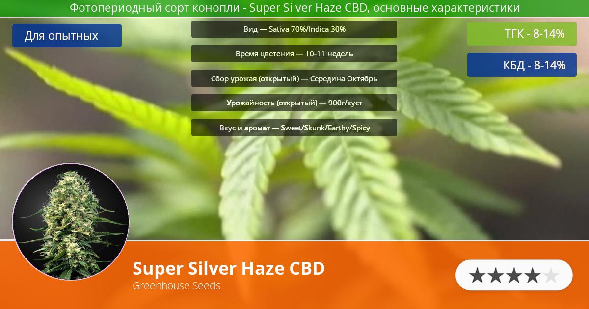 Инфограмма сорта марихуаны Super Silver Haze CBD