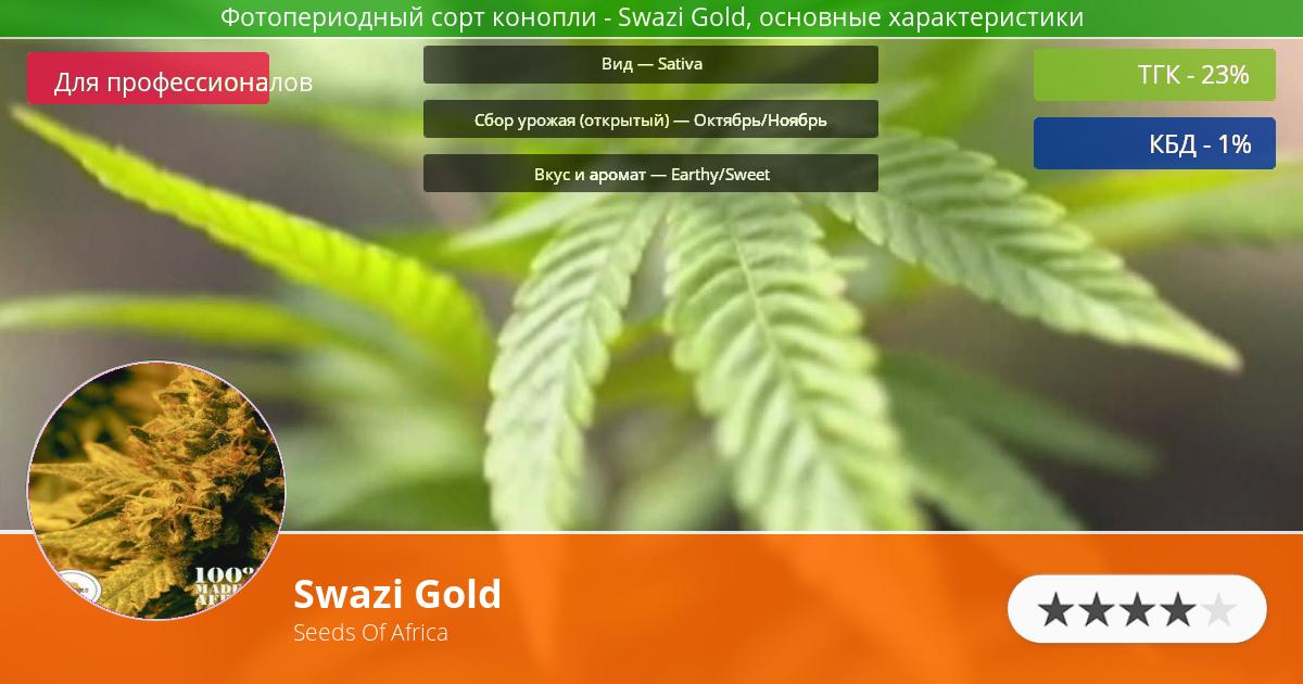 Инфограмма сорта марихуаны Swazi Gold