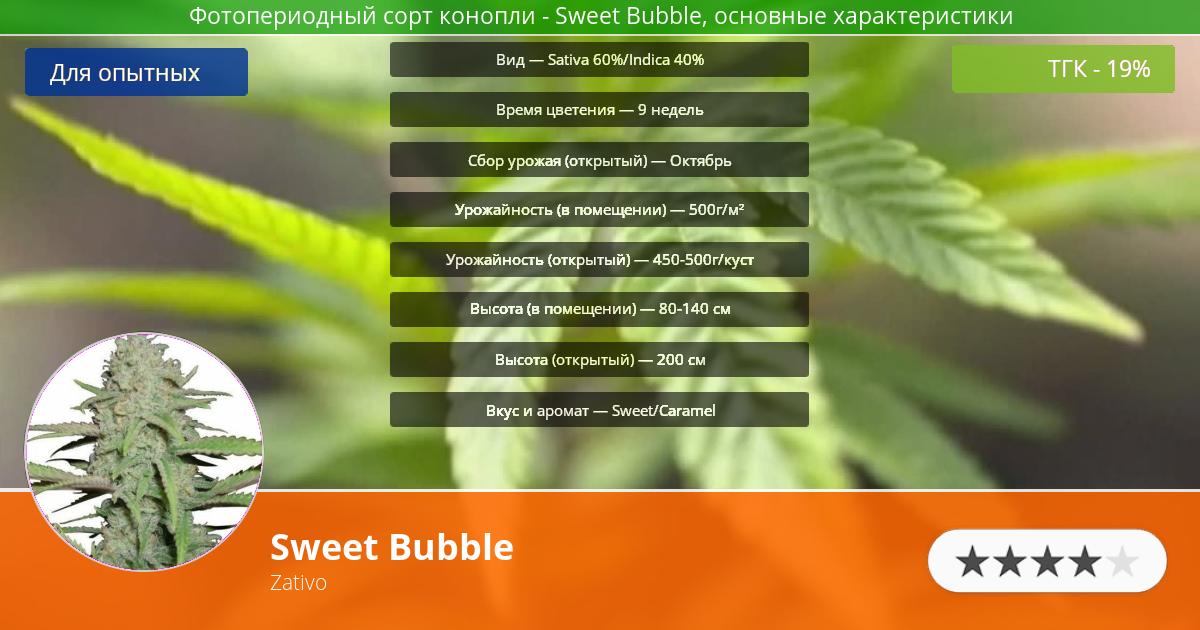 Инфограмма сорта марихуаны Sweet Bubble
