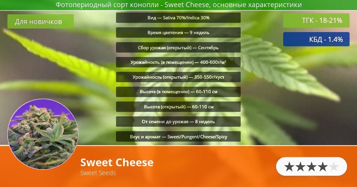Инфограмма сорта марихуаны Sweet Cheese