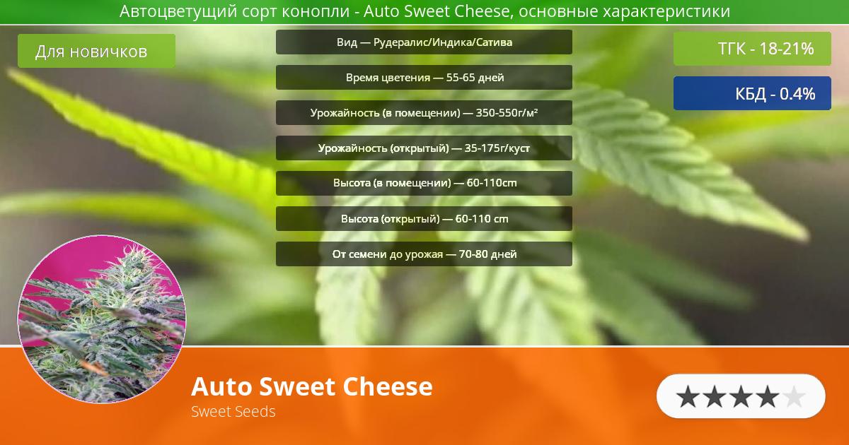 Инфограмма сорта марихуаны Auto Sweet Cheese
