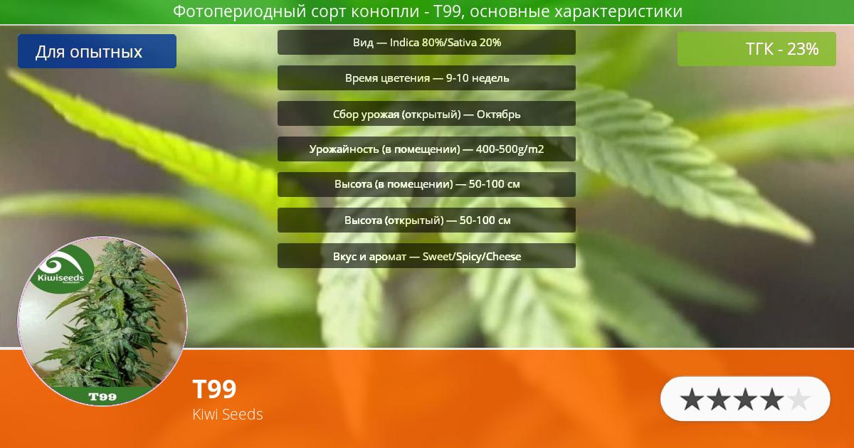 Инфограмма сорта марихуаны T99