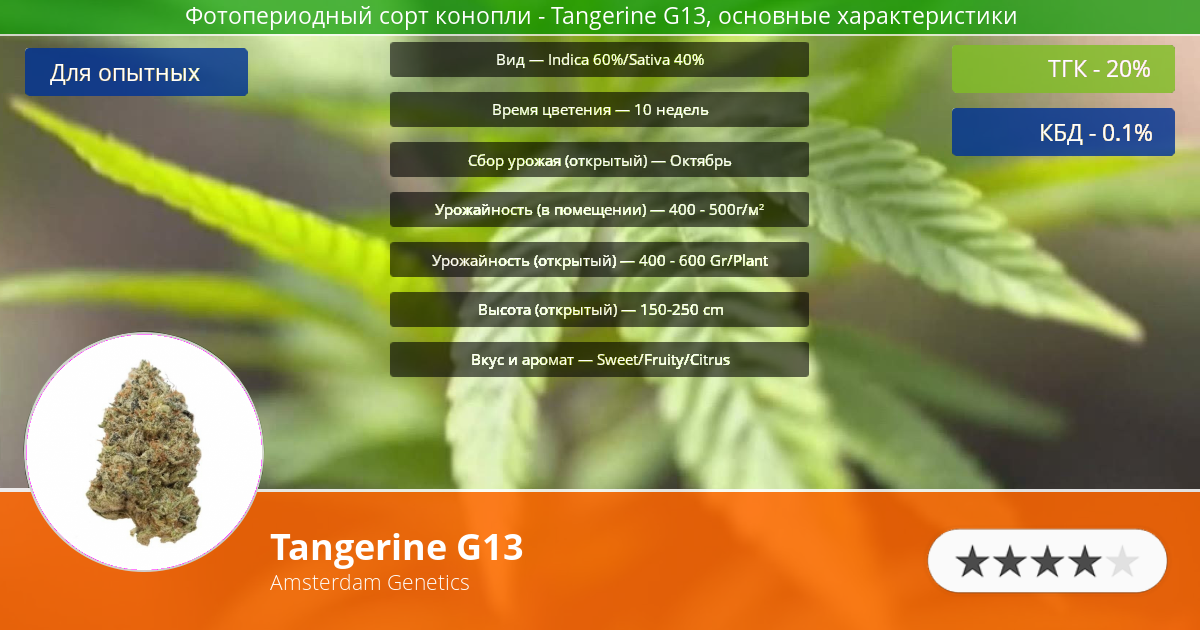 Инфограмма сорта марихуаны Tangerine G13