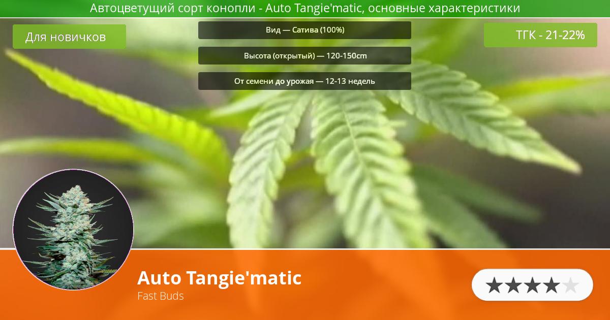 Инфограмма сорта марихуаны Auto Tangie'matic