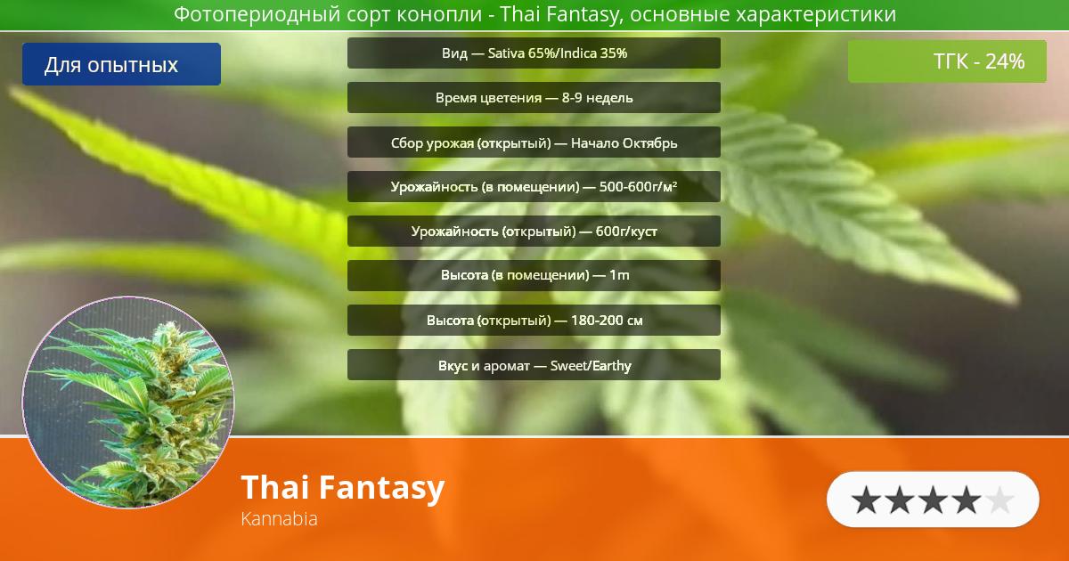 Инфограмма сорта марихуаны Thai Fantasy
