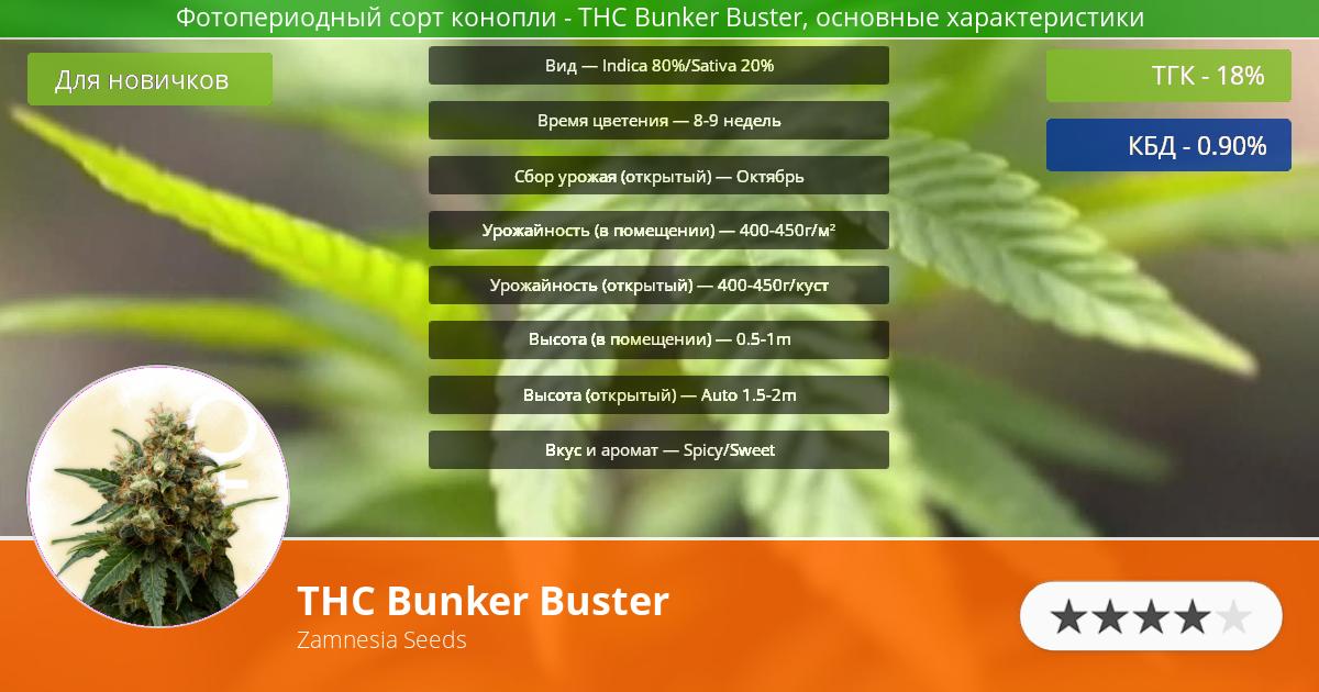 Инфограмма сорта марихуаны THC Bunker Buster