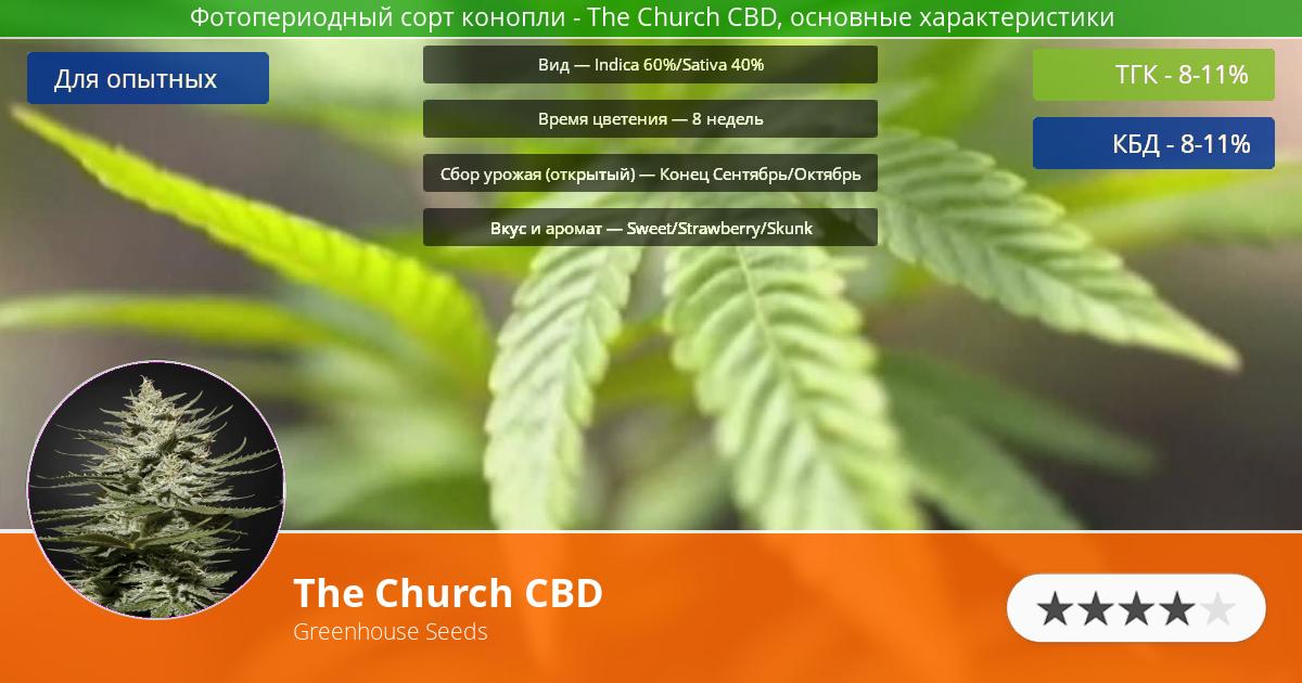 Инфограмма сорта марихуаны The Church CBD