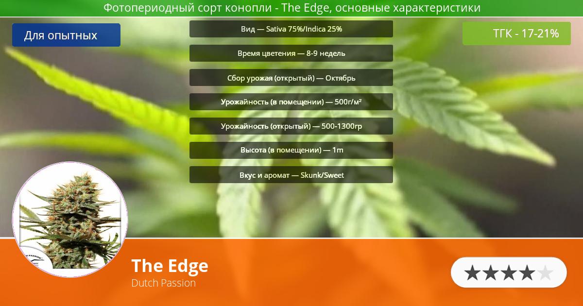 Инфограмма сорта марихуаны The Edge