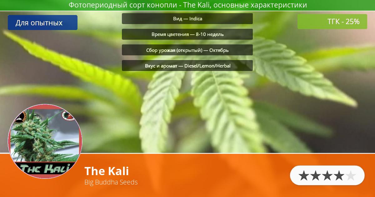 Инфограмма сорта марихуаны The Kali