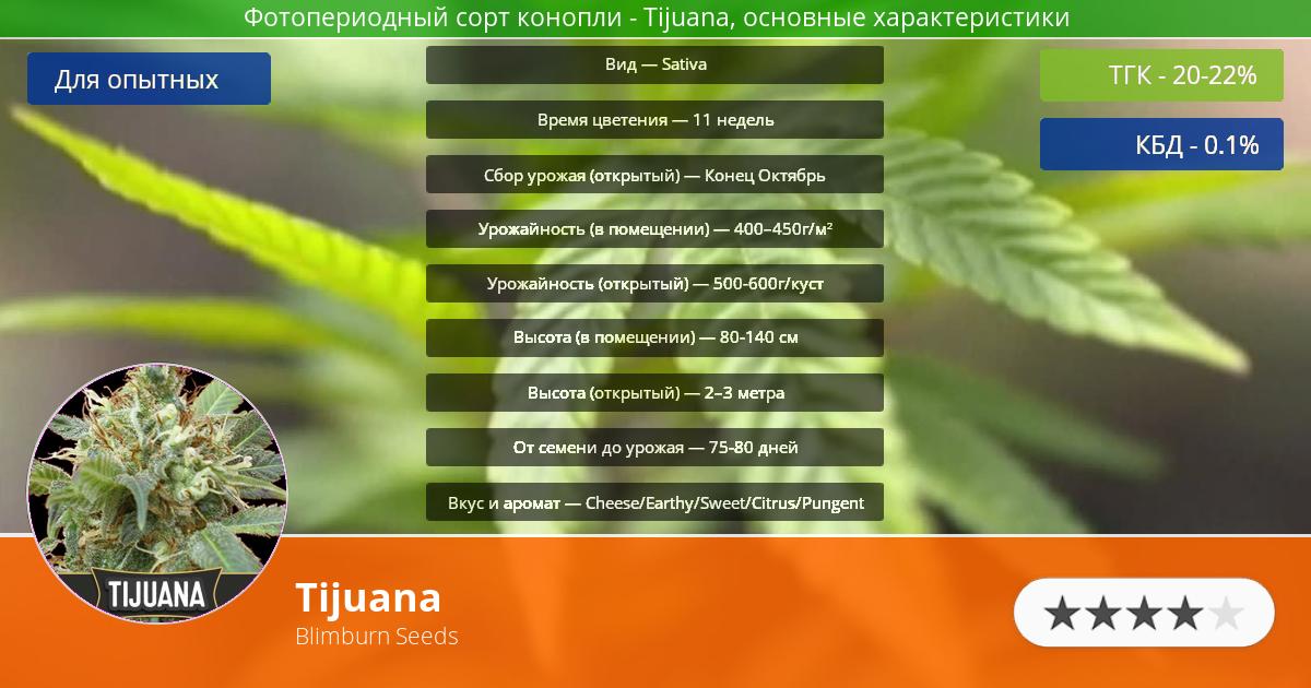 Инфограмма сорта марихуаны Tijuana