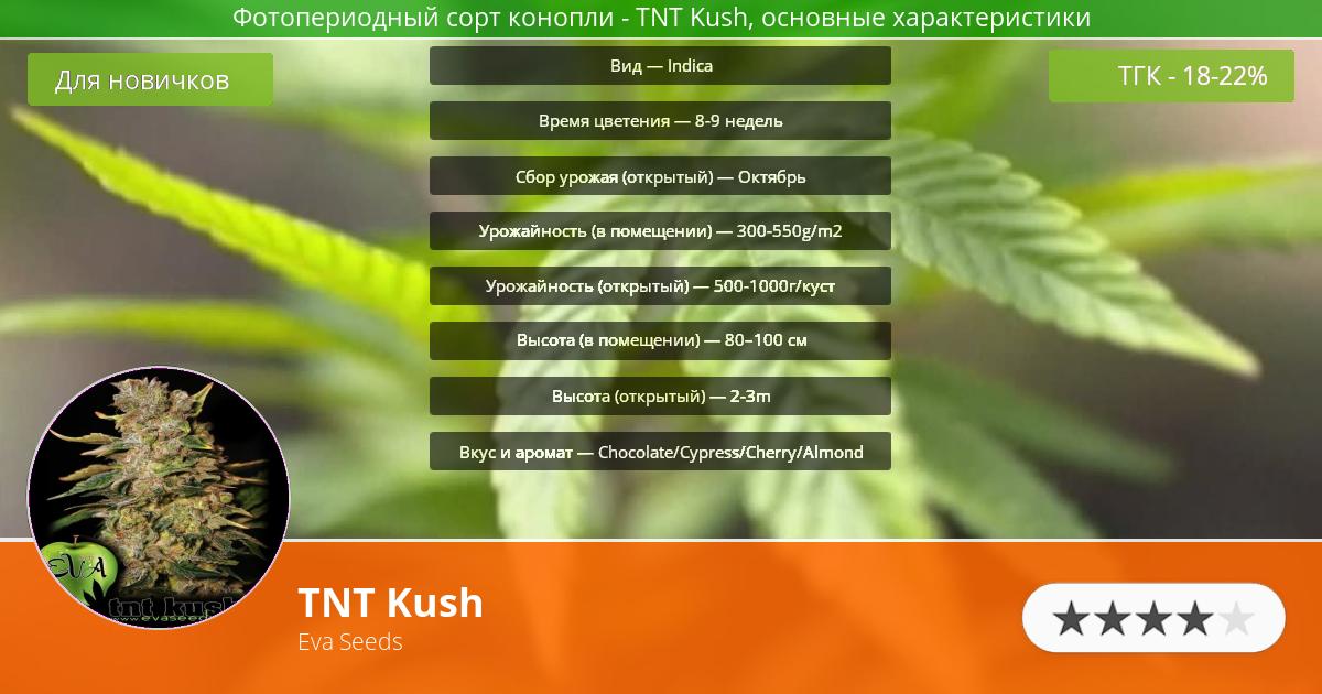 Инфограмма сорта марихуаны TNT Kush