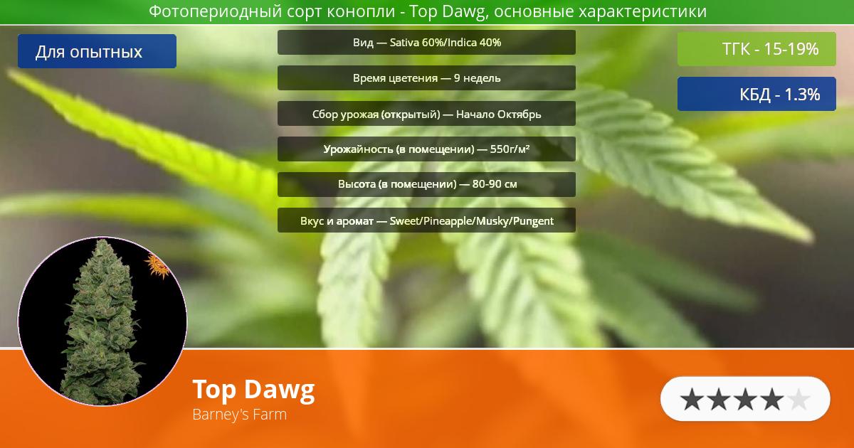 Инфограмма сорта марихуаны Top Dawg