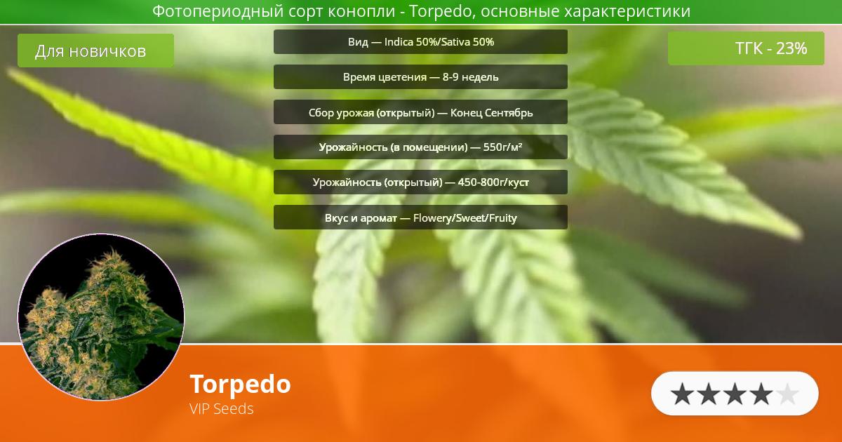 Инфограмма сорта марихуаны Torpedo