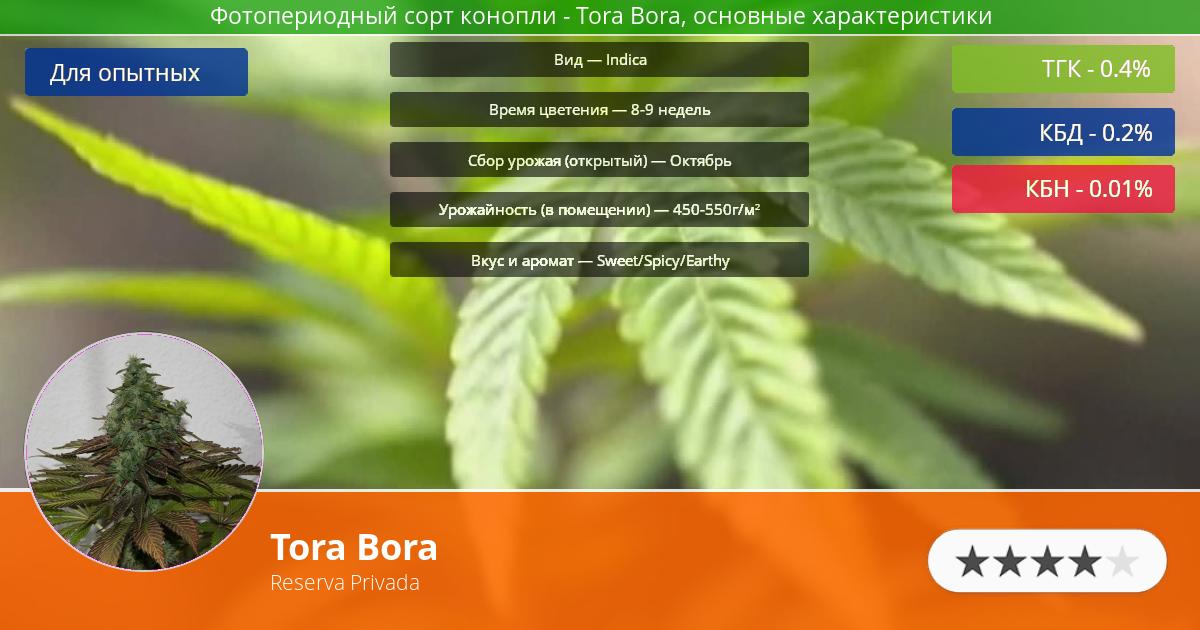 Инфограмма сорта марихуаны Tora Bora