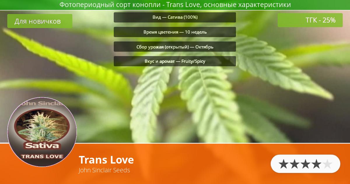 Инфограмма сорта марихуаны Trans Love