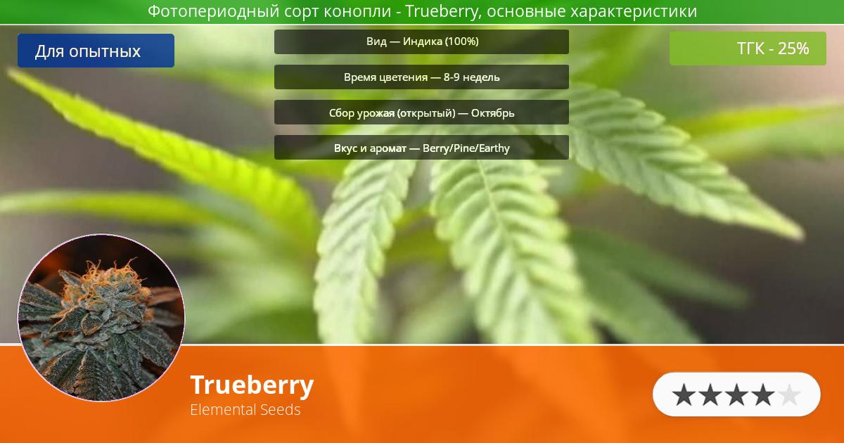 Инфограмма сорта марихуаны Trueberry