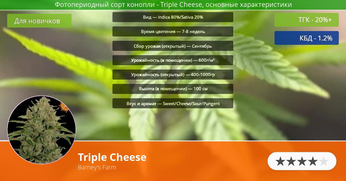 Инфограмма сорта марихуаны Triple Cheese