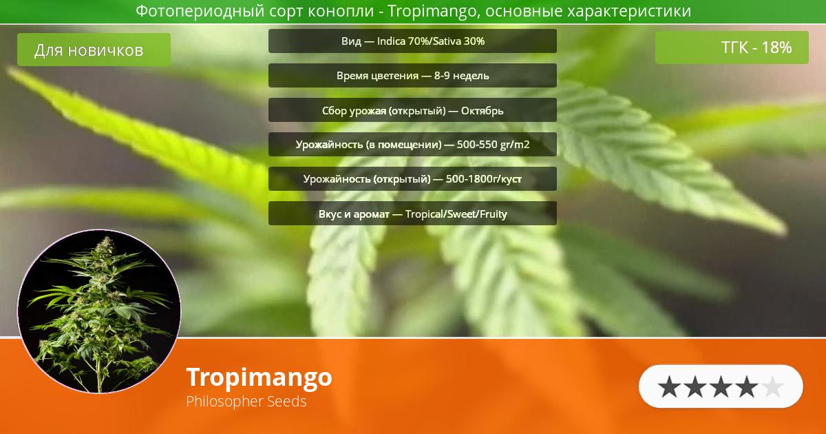 Инфограмма сорта марихуаны Tropimango