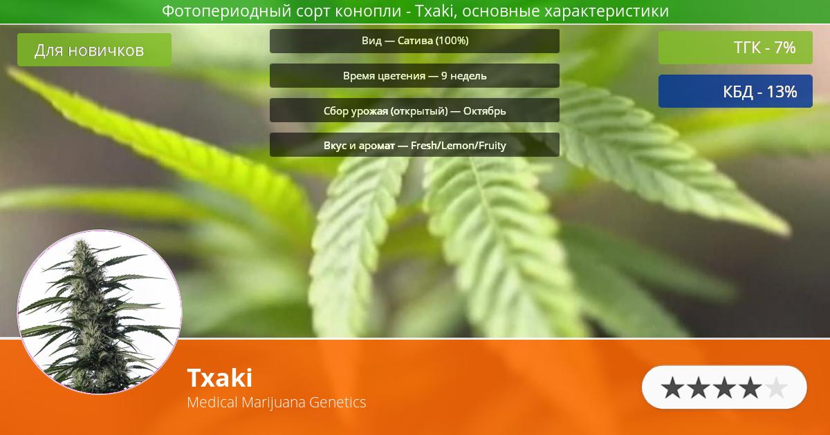 Инфограмма сорта марихуаны Txaki