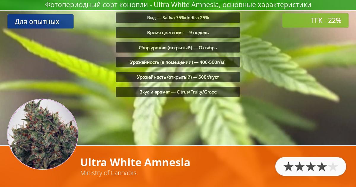 Инфограмма сорта марихуаны Ultra White Amnesia