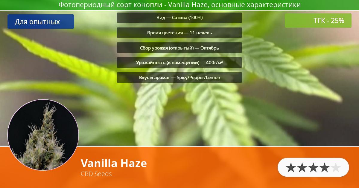 Инфограмма сорта марихуаны Vanilla Haze