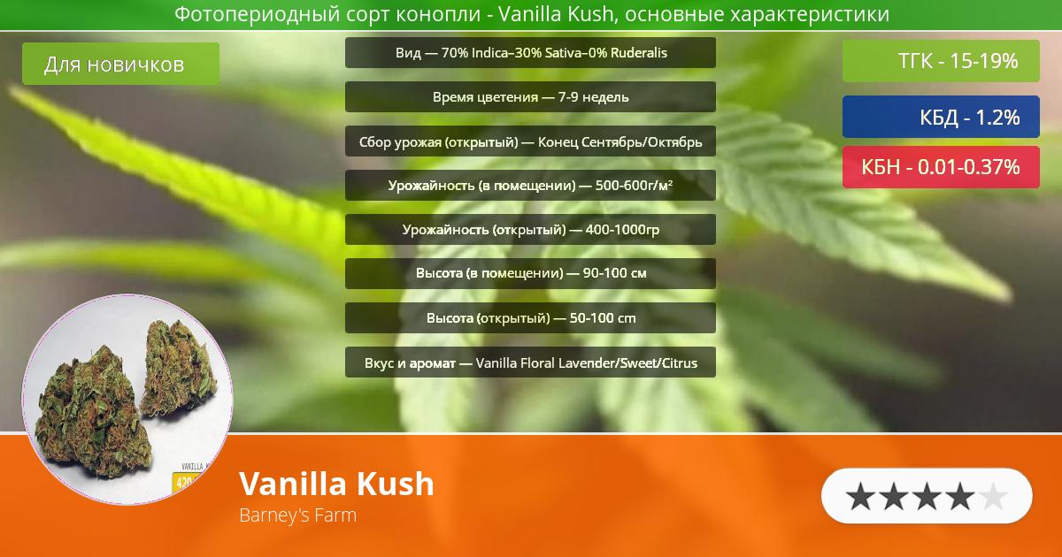 Инфограмма сорта марихуаны Vanilla Kush