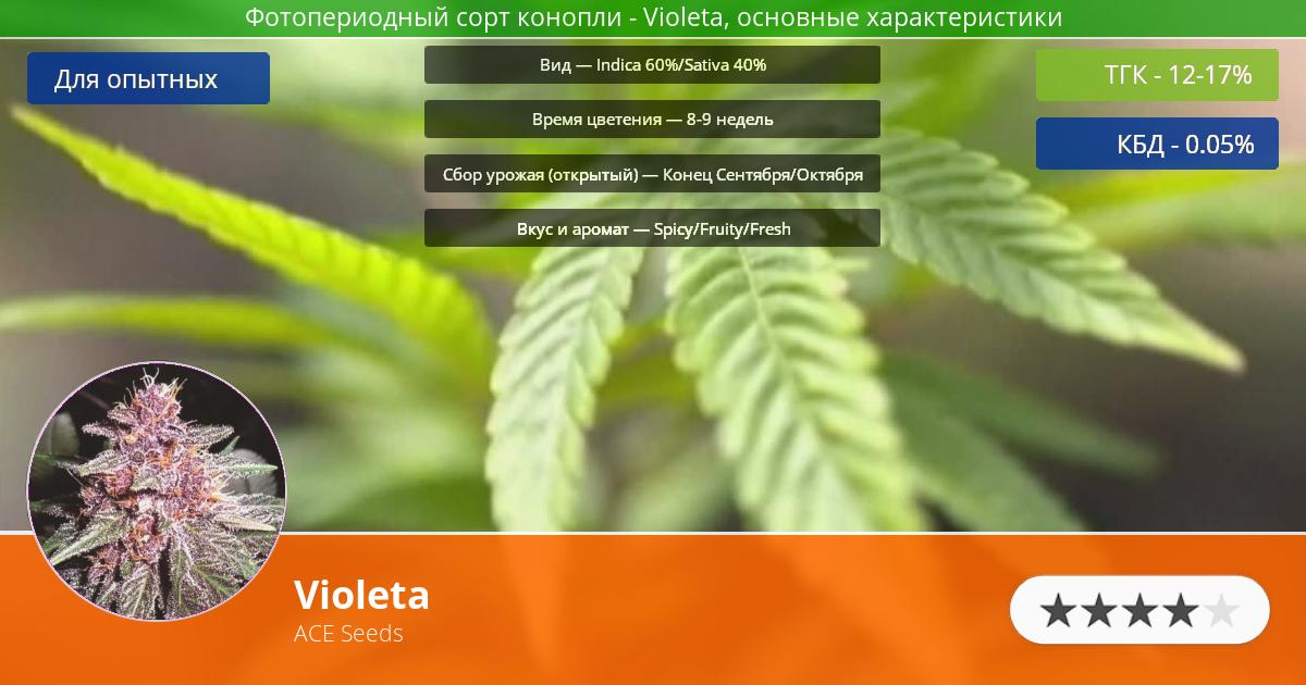 Инфограмма сорта марихуаны Violeta