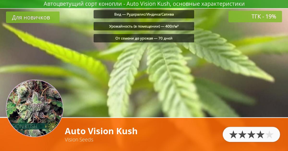 Инфограмма сорта марихуаны Auto Vision Kush