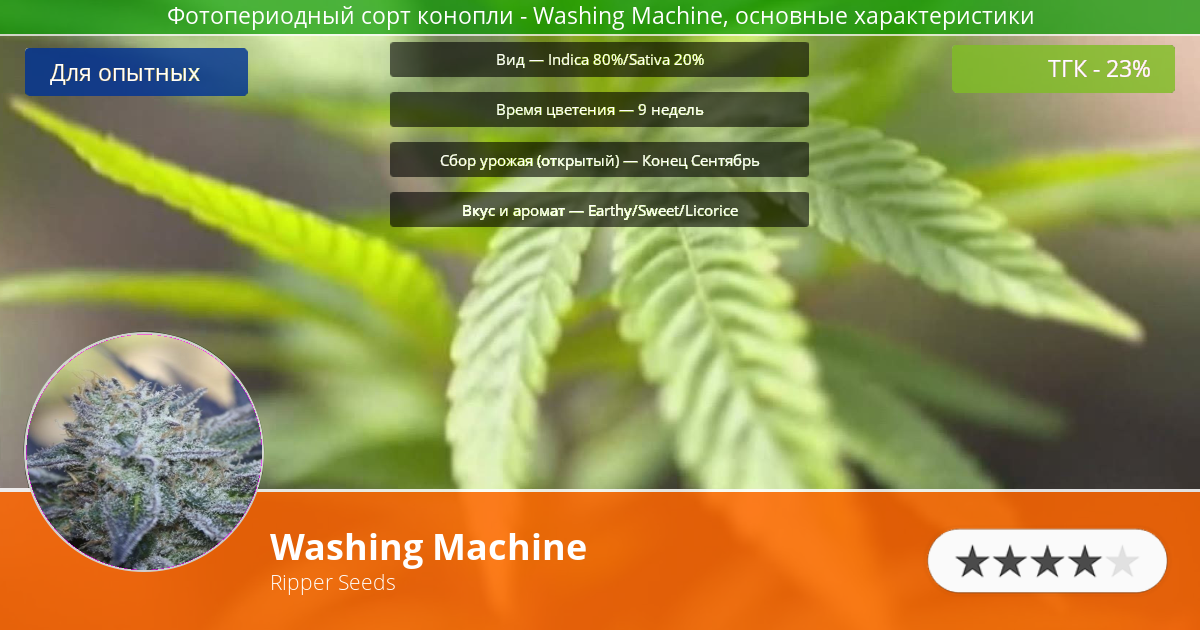 Инфограмма сорта марихуаны Washing Machine