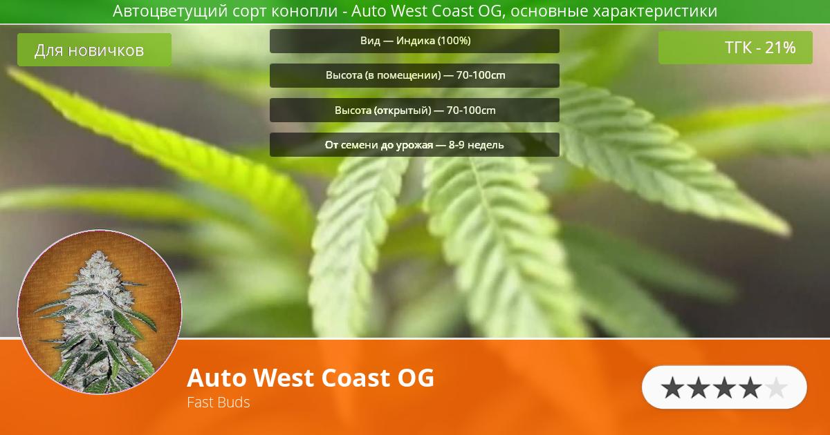 Инфограмма сорта марихуаны Auto West Coast OG
