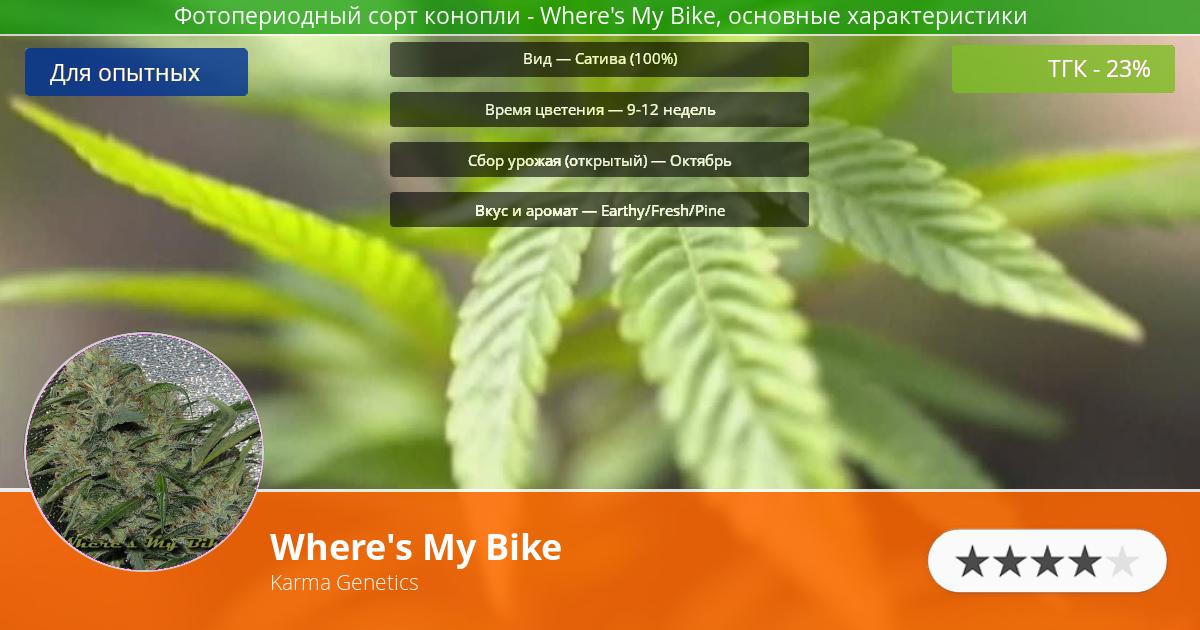 Инфограмма сорта марихуаны Where's My Bike