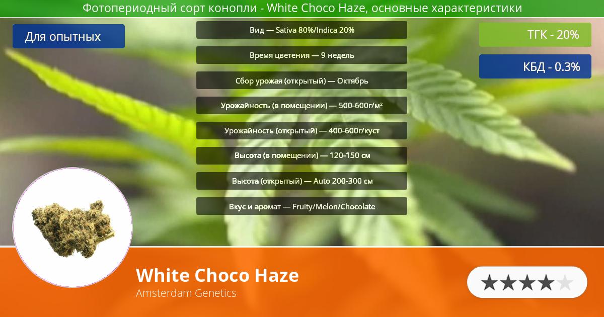 Инфограмма сорта марихуаны White Choco Haze
