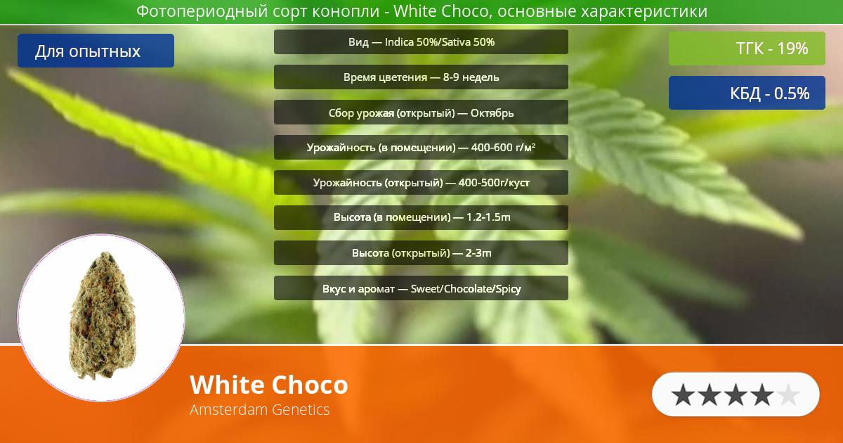 Инфограмма сорта марихуаны White Choco