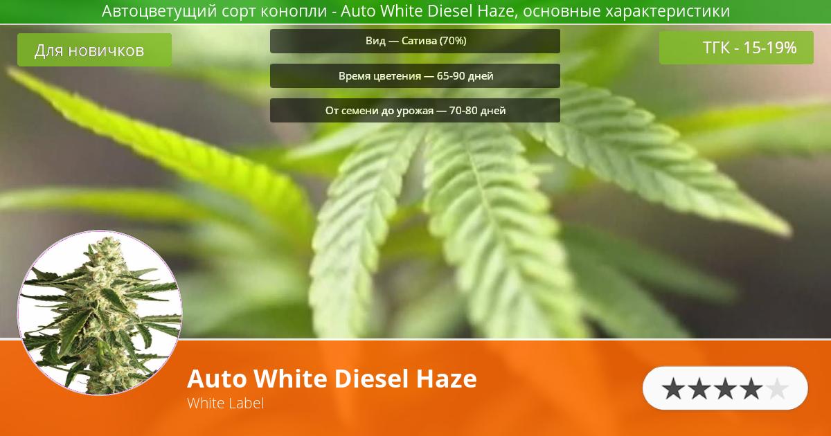 Инфограмма сорта марихуаны Auto White Diesel Haze