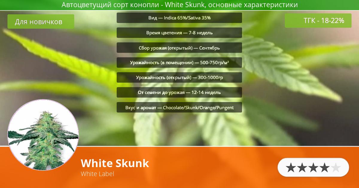 Инфограмма сорта марихуаны White Skunk