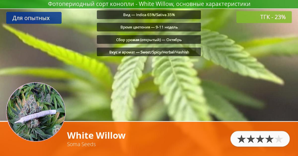 Инфограмма сорта марихуаны White Willow