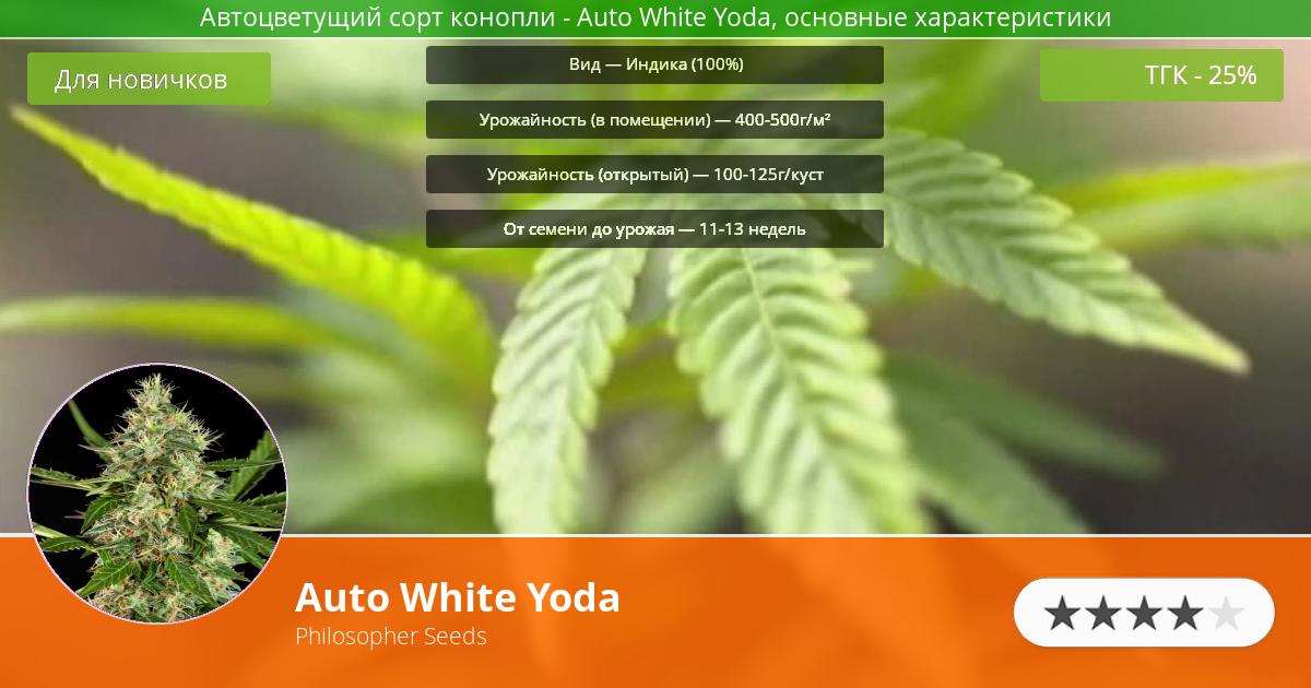 Инфограмма сорта марихуаны Auto White Yoda