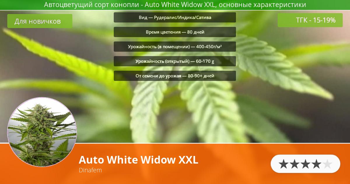 Инфограмма сорта марихуаны Auto White Widow XXL