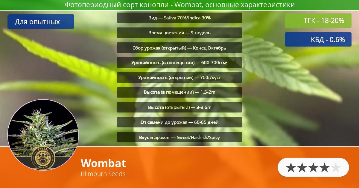 Инфограмма сорта марихуаны Wombat