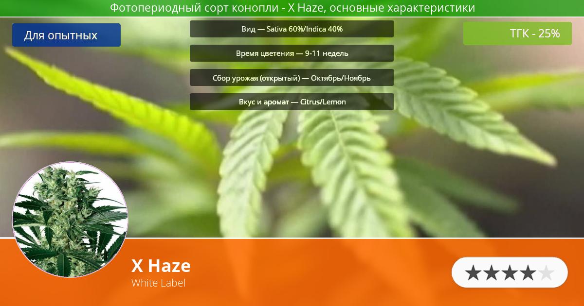 Инфограмма сорта марихуаны X Haze