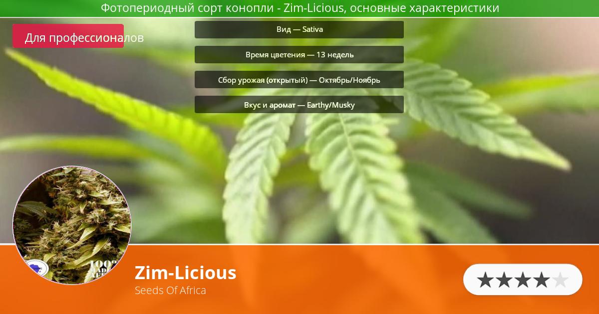Инфограмма сорта марихуаны Zim-Licious